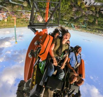 Tigris, la montaña rusa más alta de Florida, está en Busch Gardens Tampa Bay