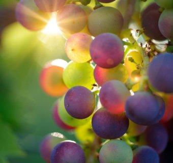 Winelovers, prepárense para la Feria del Queso y el Vino