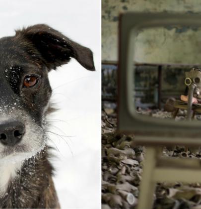 Visita a los adorables perros de Chernobyl en una experiencia en línea de Airbnb