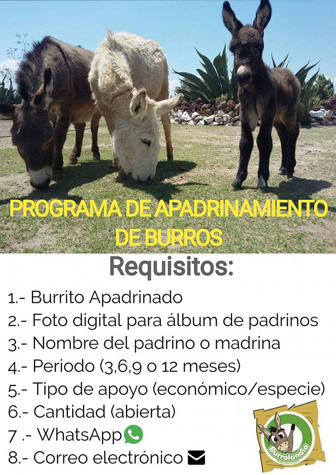 programa de apadrinamiento burros, como apadrinar un burro, apadrinar animales, donaciones para animales,